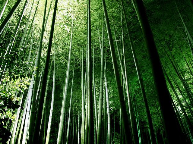 Bosque de Bambús en Arashiyama Japón