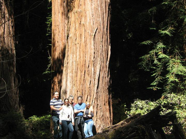Secuoyas en el Bosque Muir