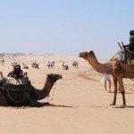 Camellos en desierto de Marruecos