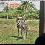 Yumka y Pantanos de Centla: Encuentro con la Naturaleza en Tabasco