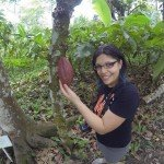 Mazorca de cacao lista para cosecharse
