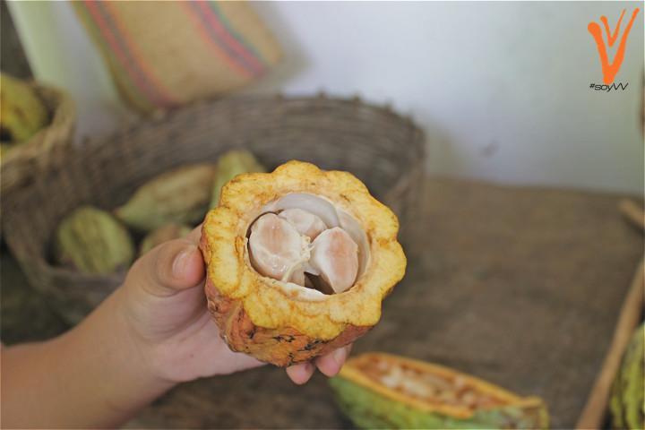 Granos de cacao fresco