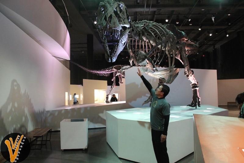 Exhibición de paleontología