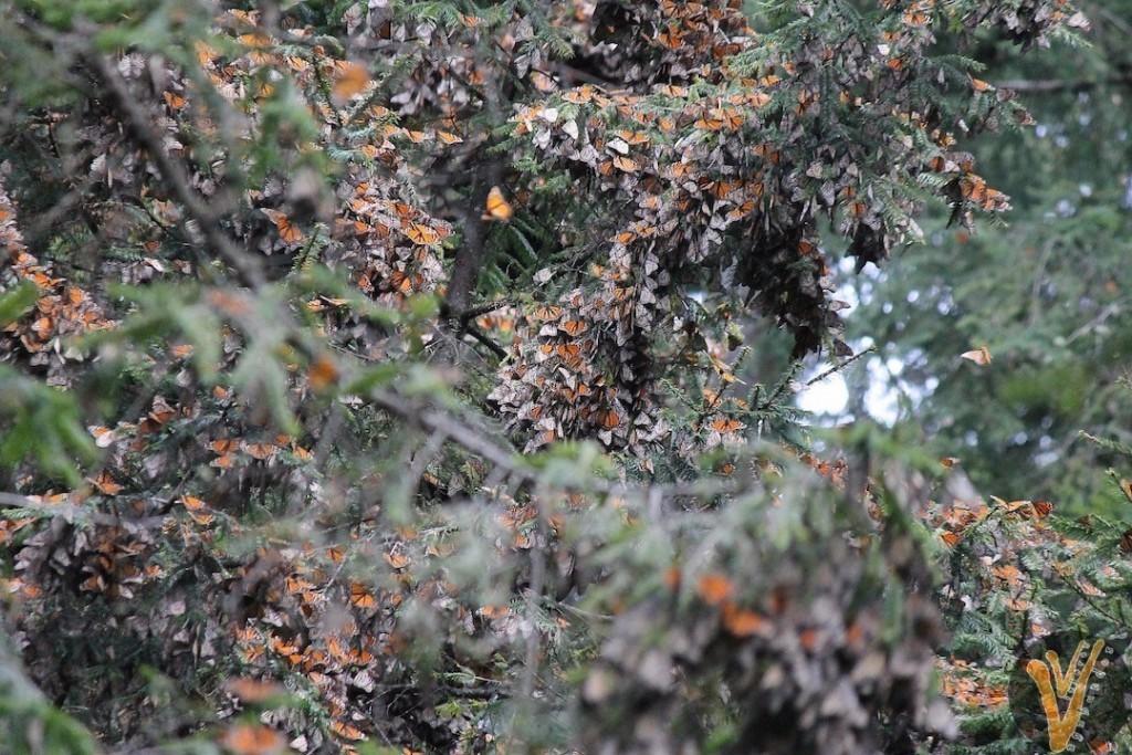 Arboles con mariposas