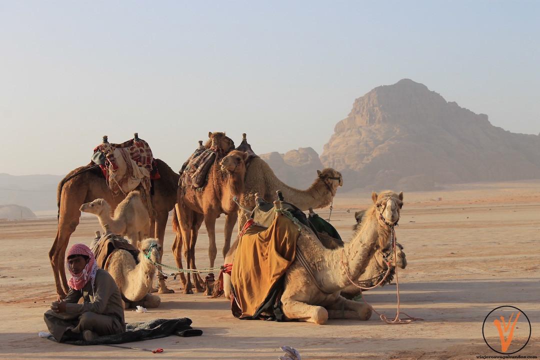 Nos esperaban los camellos