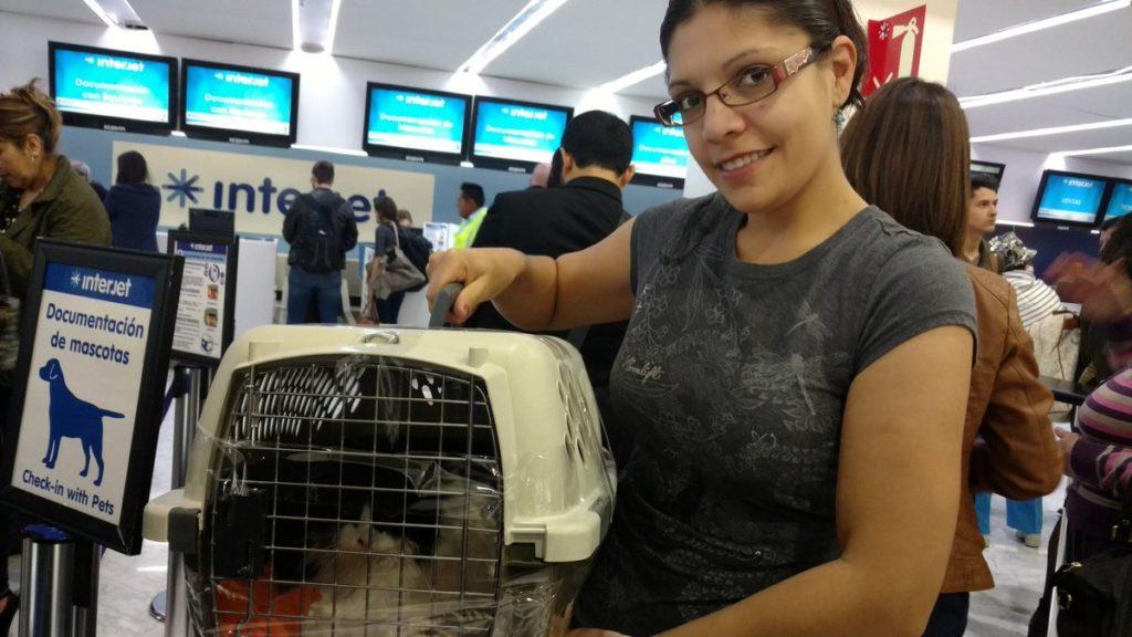 pueden viajar perros en avion interjet