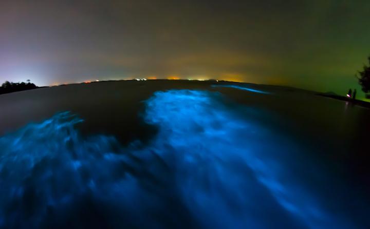 5 Playas del mundo que brillan en la oscuridad