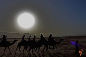 camellos2