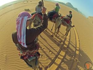 camellos4